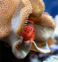 Fish can be cute...
