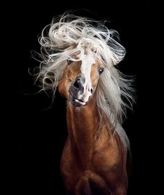 Horses are perhaps the most sublime of all animals, wild and domestic.
