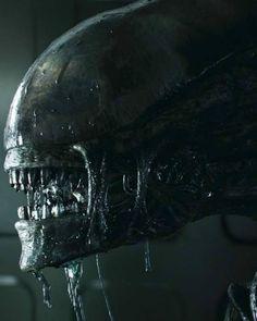 Aliens Xenomorph Alien Vs Predator, King Kong, Alien Covenant Xenomorph, Hr Giger Art, Alien Photos, Giger Alien, Alien Art, Alien Alien, Alien 1979