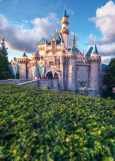 The Disney Parks
