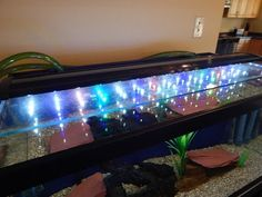 Lighting aquarium is aesthetic and necessity if you have live plants in your set-up. Here are the best led light for planted tanks reviewed.