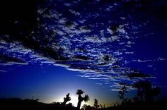 Joshua tree, CA (spent my childhood under this sunset)