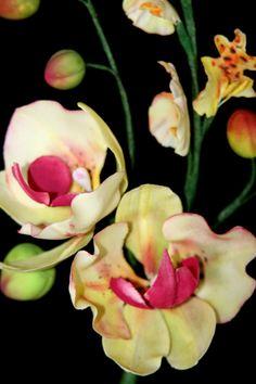 wanda orchid