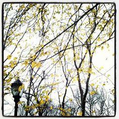 .@sir_13 (SIR13) 's Instagram photos | Webstagram - the best Instagram viewer