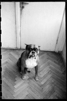 Masha Ivashintsova Photography Photography Words, Summer Garden, Toy Store, Portrait, Gallery, Dogs, Animals, Animales, Headshot Photography