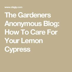 The Gardeners Anonymous Blog: How To Care For Your Lemon Cypress