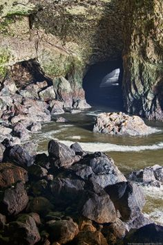 Sea Lion Caves, Newport, Oregon, USA