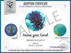 adopt a coral certificate coral guardian