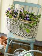 basket of violets on a chippy aqua chair - <3