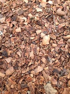 Our mulch of choice: pecan shells. Why: labor saver, aesthetics & distracts squirrels, January 29, 2014