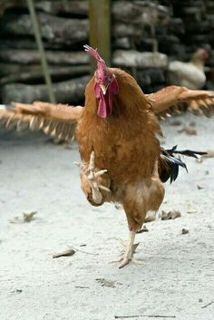 Kung Pow Chicken.