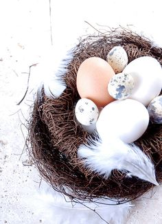 what's in the nest...