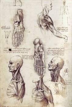 The drawings of Leonardo da Vinci - Studies of the Shoulder and Neck, c. 1509-1510