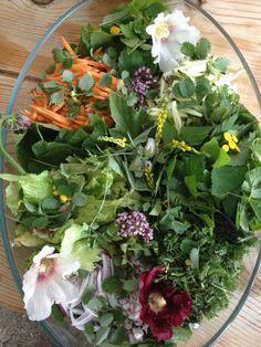 Salade d'herbes sauvages : mauves, pimprenelle, plantain, égopode, serpolet...