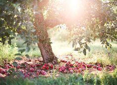 in the land of sunshine and abundance....