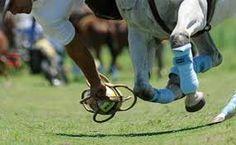 Risultati immagini per pato deporte nacional