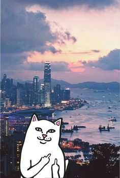 #ripndip #middle #finger #cat #wallpaper #iphone #hongkong #pink #sky