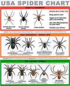 Here is a chart of some spiders known to all parts of the United States and some other continents.  It's good knowledge for how to treat bites and will increase your survival knowledge.