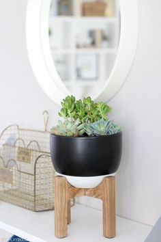 succulent_target_stand_plant-3