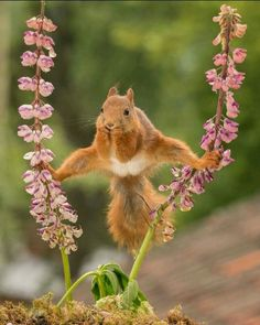 Very interesting post: 28 Animals Pictures.сom lot of interesting things on Funny Animals. Nature Animals, Animals And Pets, Baby Animals, Funny Animals, Cute Animals, Wild Animals, Beautiful Creatures, Animals Beautiful, Cute Squirrel