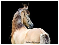 The coloring of the fjord horse...loveliness.
