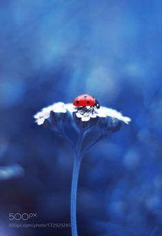 Achillea by elena_ntv #nature #photooftheday #amazing #picoftheday