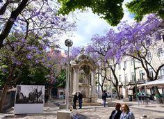 Lisbonne, Portugal Spain And Portugal, Portugal Travel, Road Trip, Learn Portuguese, Beyond Beauty, Destination Voyage, Europe Destinations, Cheap Travel, Algarve