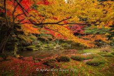 https://flic.kr/p/xEca1G | Nanzen-in, Emperor Kameyama's Exquisite Garden! | Green moss, rusty red maple leaves, at the Sogen-ike Pond (曹源池), Nanzen-in (南禅院), a sub-temple of Nanzen-ji (南禅寺) in Kyoto during the autumn season of 2014!