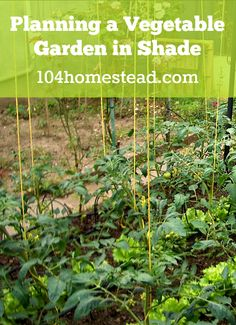 """To """"play it safe"""" I am putting partial shade tolerant plants in the questionable areas.  You wont believe how many shade tolerant vegetables there are!"""