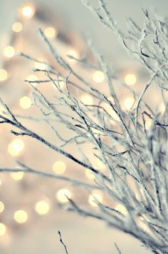 white branches and christmas lights