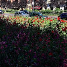 Big City Life #milanodavedere #springtime #cityview #poppies #papaveri #sole #fioridiprimavera #springcity by estrellita_61