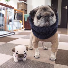 When your turtleneck game is on point. Please follow @sabuwanco ! #pugsofinstagram #パグ #pug #pugs by pugsofinstagram