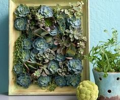 Wall/Frame of succlents