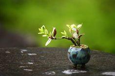 super mini bonsai (maral it's like moms bonsai, hehe)