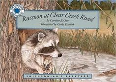 Raccoon at Clear Creek Road (Part of the Smithsonian Backyard Series)