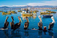 La Serena, una de las playas de Chile más elegidas por los argentinos ... pelícanos y barcazas de pescadores en el puerto de Coquimbo, atrás los edificios de La Serena y la cordillera.