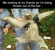 Looking for funny sloth memes? Look no further, here are 10 of the funniest sloth memes out there! Funny Shit, Funny Memes, Sloth Memes, Funny Stuff, Funny Things, Sloth Humor, Drunk Memes, 9gag Funny, Shrek Memes