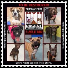 """***7 LIVES TO BE DESTROYED 03/08/18 @ NYC ACC***SO MANY GREAT DOGS ARE BEING KILLED: Puppies, Throw Away Mamas, Good Family Dogs. This is a HIGH KILL """"CARE CENTER"""" w/ poor living condition. Please Share! Click for info & Current Status: http://nycdogs.urgentpodr.org/to-be-destroyed-4915/"""
