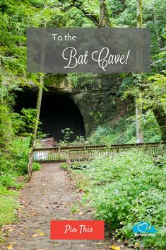 Part of the Joe Wheeler National Wildlife Refuge system, Sauta Cave is home to an estimated 300,000-400,000 endangered Gray and Indiana bats.