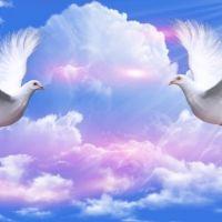 ~*~ Doves Peace ~*~