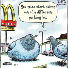 Bird obesity...it's funny, but not because it's true
