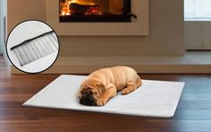 Keep your furry friends warm on chilly nights with Pawever Pets' Pet Mat at 61% OFF - a self-heating pet mat that reduces risk of severe cold exposure for only AU $19.00 (was AU $49.00). Battery Operated Blanket, Pet Mat, Body Heat, Pet Beds, Large Dogs, Dog Cat, Cold, Pets, Friends