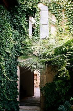 doors and windows and a lush vine.