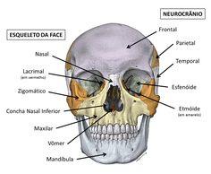 39 Ideas medical student study note posts for 2019 Human Skull Anatomy, Head Anatomy, Anatomy Art, Medical Laboratory Science, Science Humor, Study Organization, Study Techniques, Medical Facts, Student Studying