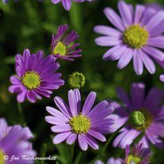 Tiny purple flowers:)