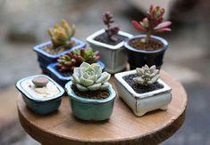tiny clay glazed pots for miniature bonsai / cactus / succulents Succulents In Containers, Cacti And Succulents, Planting Succulents, Potted Plants, Cactus Plants, Garden Plants, Planting Flowers, Bonsai Plante, Mini Plantas