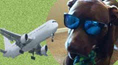 Delta Air Lines: Perro de apoyo enloquece y ataca a pasajero en ... - Diario Trome