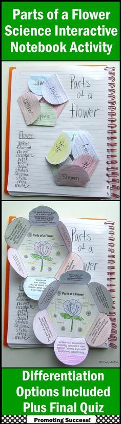 Parts of a Flower: Students will color then cut out the two flower shapes. After it is attached to their science interactive notebooks, they will need to identify which part of the flower the definition is describing and write it on the flap. A separate word bank is provided if needed. A final quiz is also provided. (Science Plants Vocabulary Grades 4, 5, 6) www.teacherspayte...