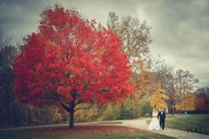 This would be amazing to find a tree for my September wedding trokk