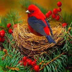 such beauty! - #birds